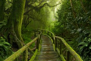 iStock-512289218-jungle-path-300x200
