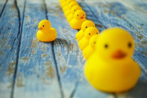 One large yellow rubber duck with many smaller ones following it